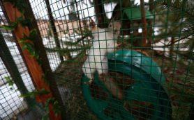 За жизнью «Лопатинского сада» в Смоленске можно будет наблюдать онлайн