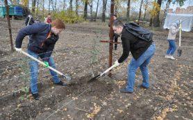 Смоленск подключится к всероссийской акции «Сад памяти – сад жизни»