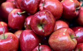 Три фуры с яблоками задержали смоленские таможенники