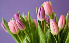 Где в Смоленске можно будет торговать цветами к 8 марта
