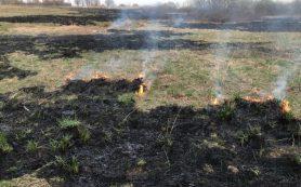 Пожарные зафиксировали 20 возгораний сухой травы на Смоленщине за сутки
