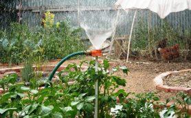 В Смоленске дачники отсудили у председателя садоводческого товарищества крупную сумму