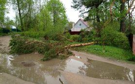 В Смоленске из-за непогоды начали падать деревья и остановки