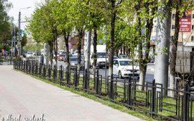 В Смоленске дополнительно озеленяют одну из центральных магистралей