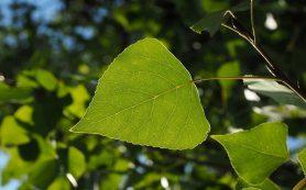 Озеленять Смоленск продолжат осенью 2020 года
