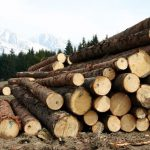 Жителя Духовщинского района подозревают в незаконной рубке леса