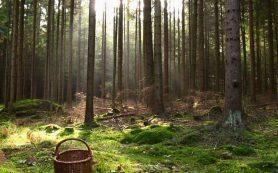 Смоленских любителей «тихой охоты» призывают соблюдать меры предосторожности