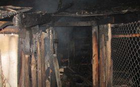 В Починковском районе горели хозпостройки