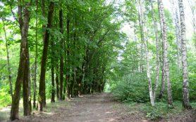 Смолянам пригрозили штрафами за посещение лесов и разведение костров