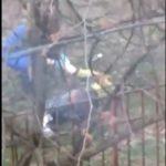 Стали известны последствия нападения добермана на женщину под Смоленском