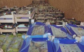 Смоленские пограничники выявили крупную партию санкционных фруктов