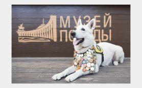 Рисунки смолян вошли в виртуальную выставку «Собаки-герои»