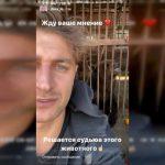 Известный блогер DAVA озаботился судьбой медведицы в Смоленской области