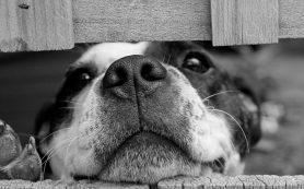 Смоленский суд оштрафовал владельцев пса, который напал на женщину