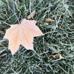 В Смоленской области похолодает до -6